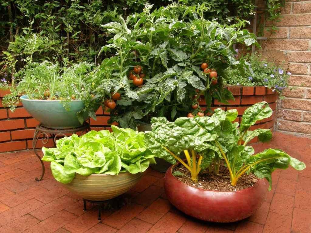 کاشت سبزیجات در آپارتمان و هرآنچه باید در این مورد بدانید