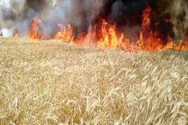 تروریستهای آمریکایی دشت های کشاورزی سوریه را آتش می زنند