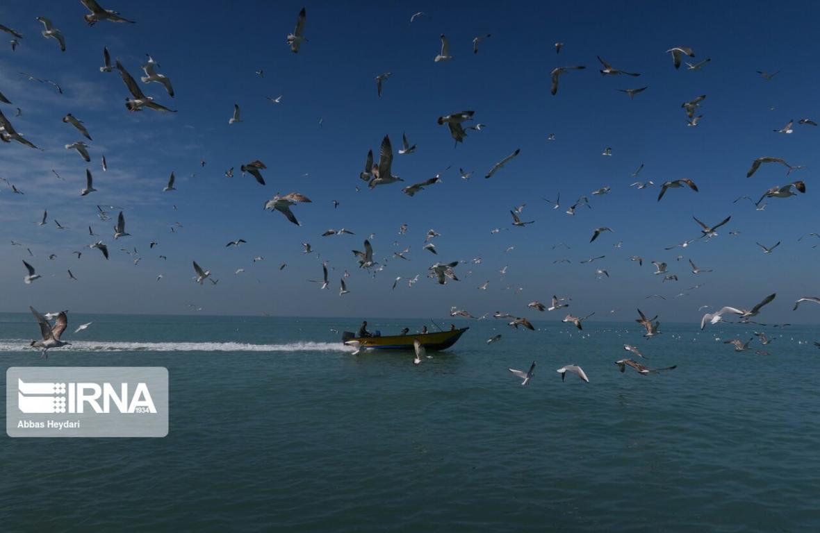 خبرنگاران مهاجرت پرندگان به تالاب شادگان شروع شد