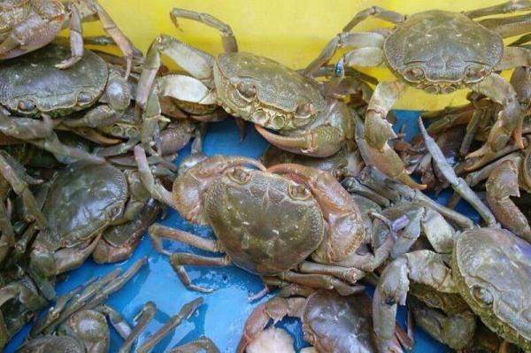 خبرنگاران 76 خرچنگ آب شیرین خوزستان از قاچاقچیان کشف شد