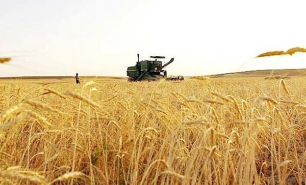 خرید تضمینی گندم در کشور شروع شد، قیمت خرید تضمینی 4 هزار تومان خبرنگاران